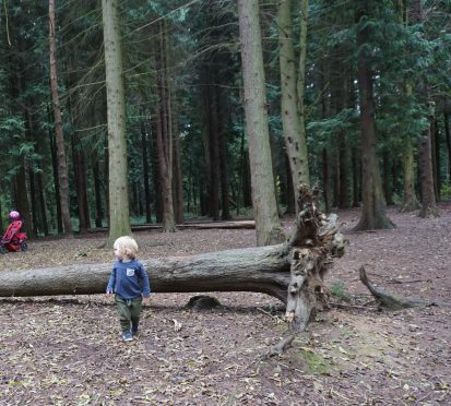 My baby is growing up. Autumn walks at Itchen Valley Country Park
